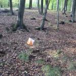 Wunderbarer Laubwald bei Freudenberg